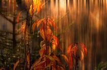 ' autumn fire - Herbstfeuer' von Chris Berger