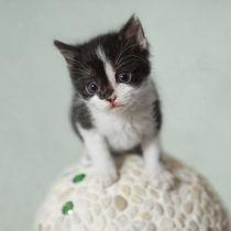 Kleine Katze / 13 von Heidi Bollich
