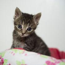 Kleine Katze / 12 von Heidi Bollich