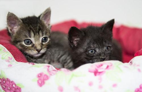 Dsc-3935-dot-ekh-kittens1-09-16