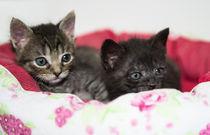 Kleine Katzen / 1 von Heidi Bollich