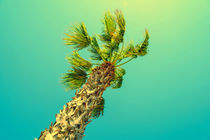 Green Palm Tree On Clear Blue Sky von Radu Bercan