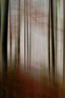 'Im Nebel -Waldlichtung' von Chris Berger