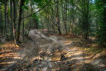 'Forest' by Adrian Macinca