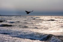 Crow flying over the waves by Jessy Libik