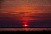 Bloodshot Sunset by Jessy Libik