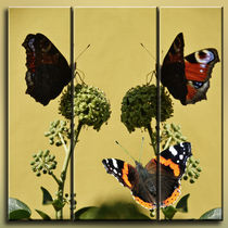 Triptychon - Schmetterlinge von Chris Berger