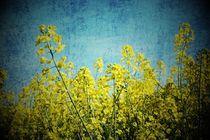 blau-gelb von er