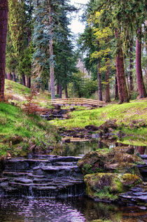 Life Flows by Vicki Field