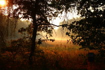 Morgensonne geheimnisvoll von Simone Marsig