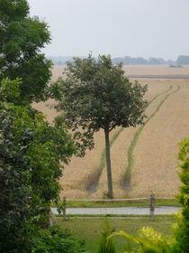 Das Feld ganz einsam... von Simone Marsig
