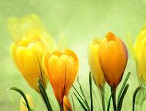 es wird Frühling von Ingrid Clement-Grimmer