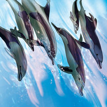 Spielende Delphine beim abtauchen   von Ingrid Clement-Grimmer