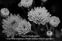 Chrysanthemen mit Spruch von er