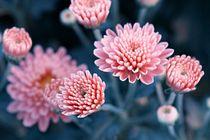 Blütenhauch von er