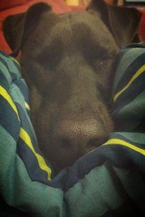 Sleepy dog by Isabela Modenezi