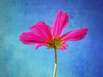 Blüte von Peter Bergmann