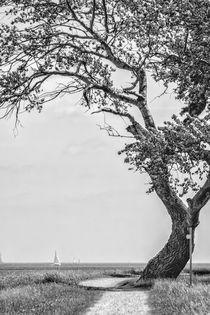 Deichbaum von kiwar