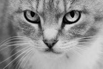 Katze von kiwar