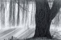 Baum im Winterkleid von kiwar