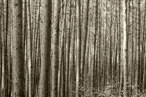 Wald by kiwar