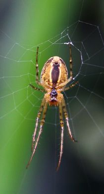 Spinne im Netz by Simone Marsig