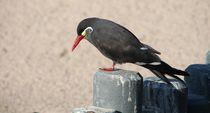 Watvogel  von Ralf Wolter