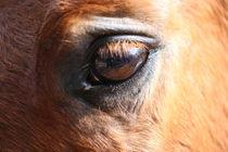 Auge um Auge mit dem Pferd by Simone Marsig
