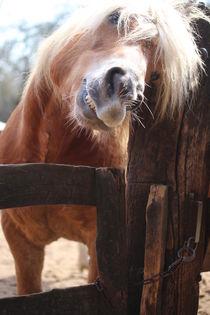 Entspannt genießen, meint das Pferd.  by Simone Marsig
