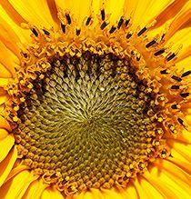 Die Sonne geht auf - und das auf der Erde von Martina Lender-Frase