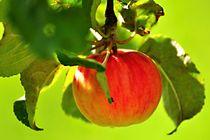 Apfel in der Sonne von Anita Becker