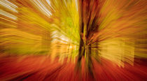 Triptych Autumn colours - Herbstfarben (2) by Silvia Eder
