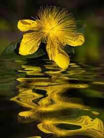 water bloom - Wasserblüte von Chris Berger