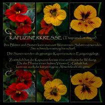 Triologie - Kapuzinerkresse von Chris Berger