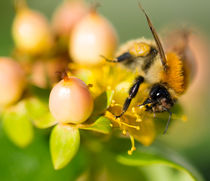 bee at work by Alexandre Gaillard
