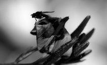 bug silhouette  by Alexandre Gaillard