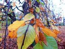 Herbstblätter von Zarahzeta ®