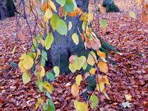 Herbststamm by Zarahzeta ®