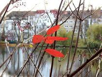 zarter Herbst by Zarahzeta ®