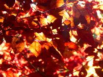 Herbstfarben von Zarahzeta ®