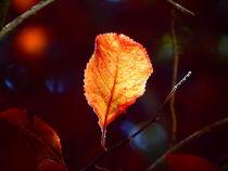 Herbstblatt von Zarahzeta ®