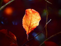 Herbstblatt by Zarahzeta ®