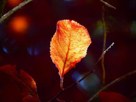 Herbst9-original