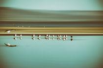 Vogel schwärmen  by Bastian  Kienitz