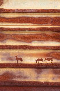 Rust Oryx von Adrian Hillman