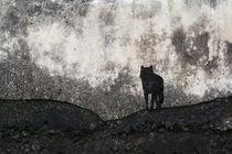 Lone Wolf by Adrian Hillman
