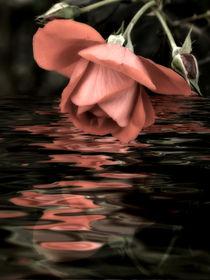 Rosenwasser von Chris Berger