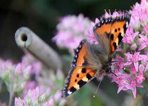 Schmetterlinge2 by Regina Raaf