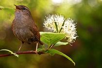 Vogelgezwitscher  von Ingrid Clement-Grimmer