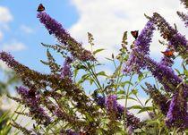 Schmetterlinge4 von Regina Raaf